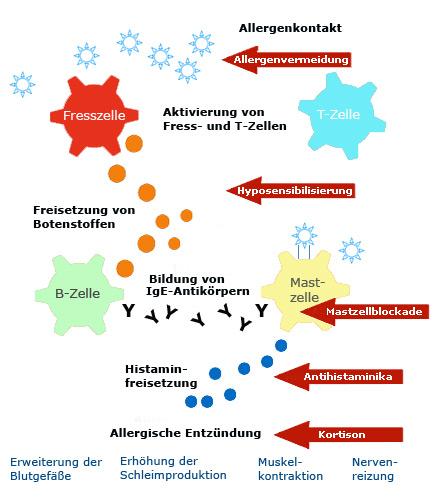 Kortison allergisk reaktion
